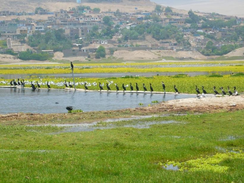 Humedal Santa Rosa en Chancay - Lima